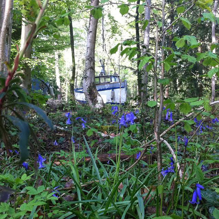 bluebells_withdrawn