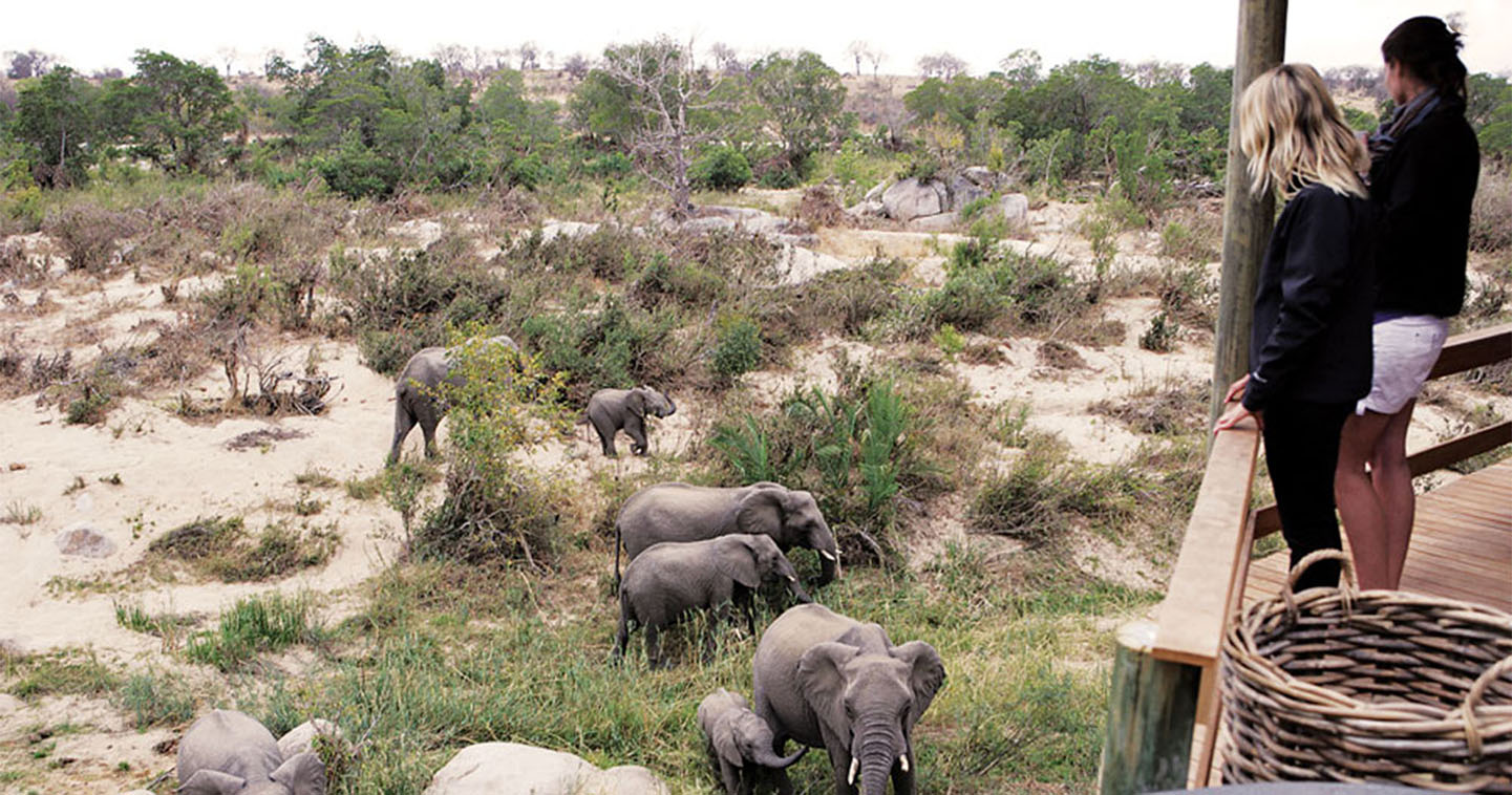 wildlife-viewing-londolozi-south-africa