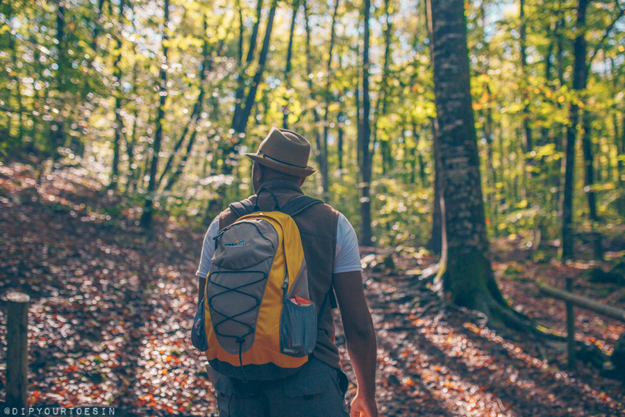 Walking in the Forest of La Fageda d'en Jordà, Girona, Spain